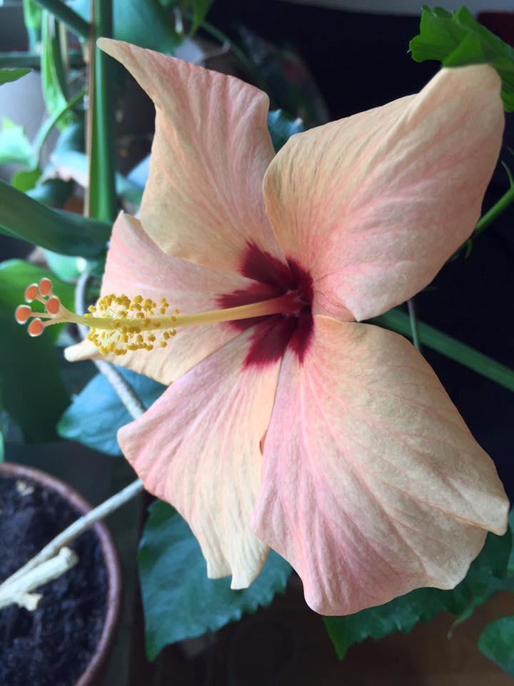 Morfars blomma