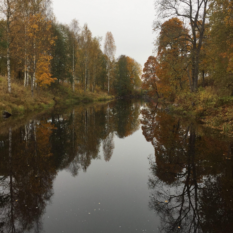 Höstgula träd som speglar sig i ett stilla vatten